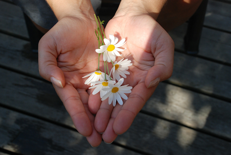 Dana - vrijgevigheid - Bright Dharma vipassana sangha